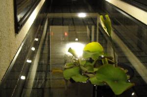水中照明 池 水盤 LED