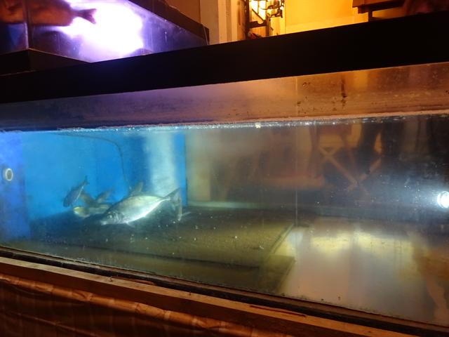 水槽設置6W水中照明